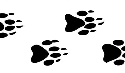 Animal Tracks: Plugging in