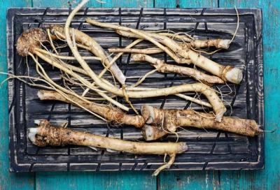 Horseradish is the zing of a garden