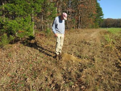 Fire Ants in Virginia – Part 1: Unwelcomed, Uninvited Visitors to Halifax County