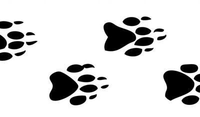 Animal Tracks: Nothing but bad news