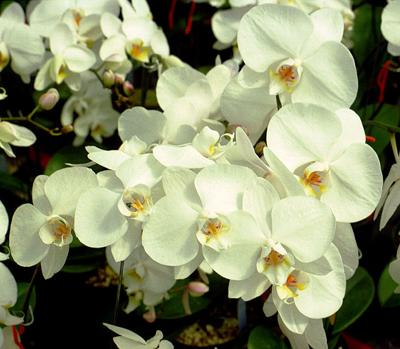 Orchids for Beginners