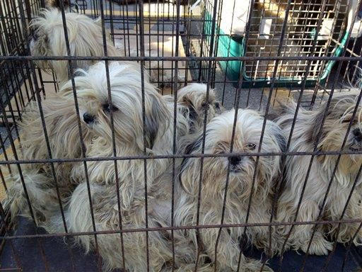 Grand Rapids-area couple pleads guilty to animal cruelty; had nearly 400 dogs