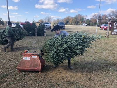 Lee's Christmas Tree Farm