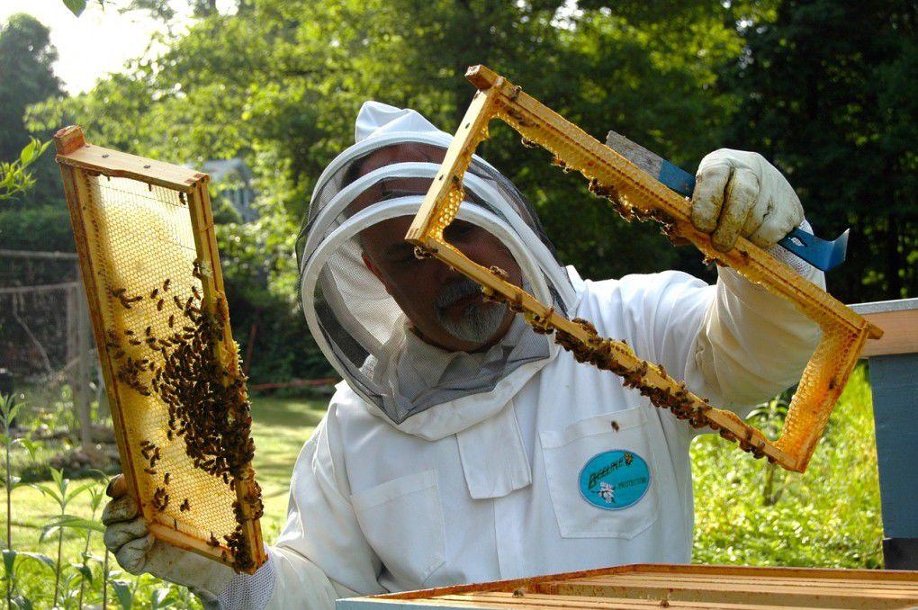 beekeeper_image.jpg
