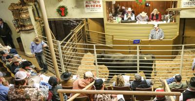 Bull sale raises funds for scholarships