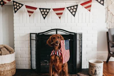 Fourth of July Pet Talk.jpg