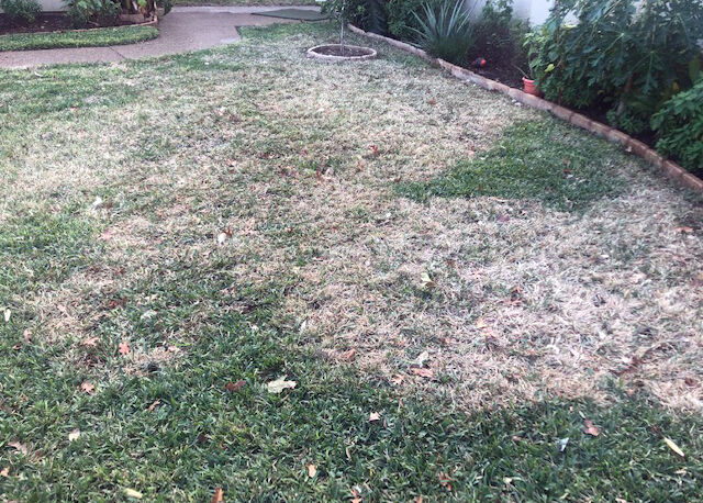 1.04.21 Brown patch in mid-winter.jpg