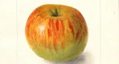 Texas Tech class seeks location of missing heirloom apple developed in Paris