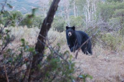 bear up close.JPG