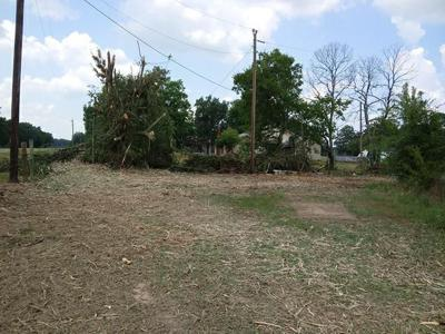 Electric Co  reacts to complaint of excessive tree cutting | News