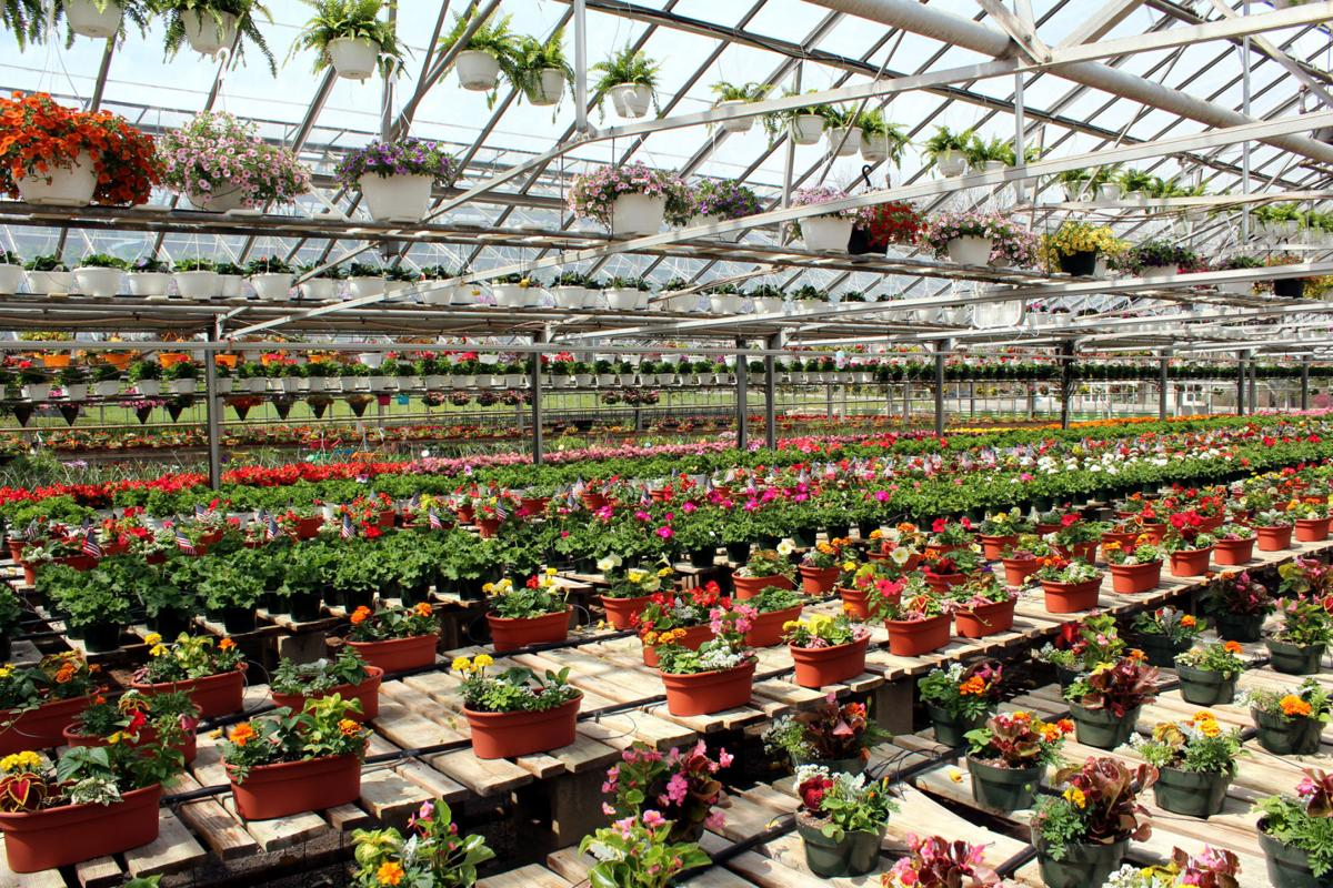 Under the Glass: Frailey\'s Greenhouse and Garden Center open for ...