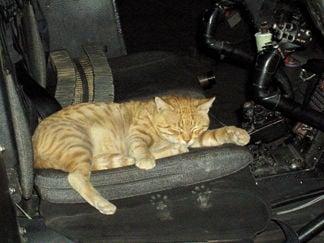 Sgt. cat 2 naptime.jpg