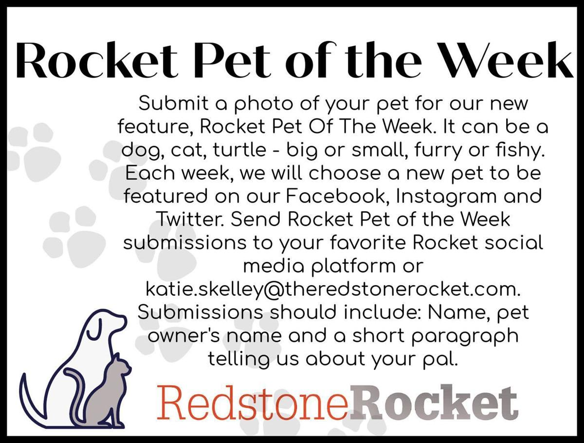 Pet of the Week instructions
