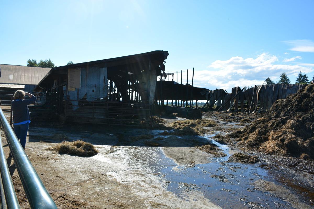 ridgefield barn burns down just weeks after housing 800 cows