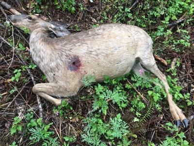Suspected poaching