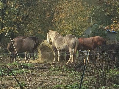 hay for horses by paying attention