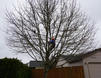 190424.life.trees.JH.JPG