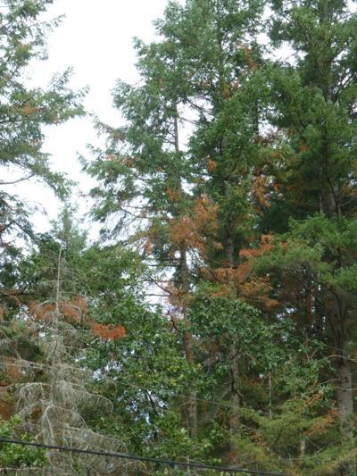 Branch flagging