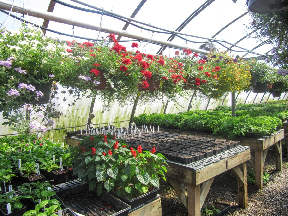 Annual bghs ffa plant sale set for may 2 3 news for Plante 42 chris