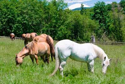 Mustang Mountain Ranch