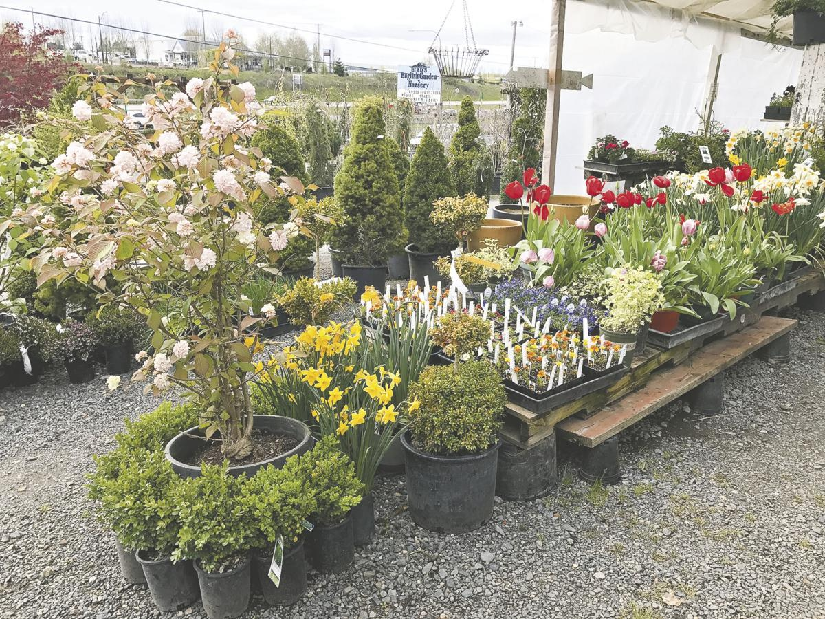 Sprouting trends home scene thereflector annuals perennials shrubs trees and plants are neatly displayed at birds english garden location and you can also visit with them at the annual home and izmirmasajfo