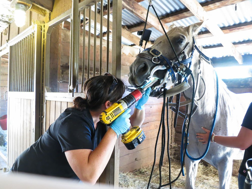 Equine Dental Care Keeps Horses Healthy Horse Corral