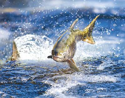 Hunting & Outdoors: Time to cram in one last fishing trip