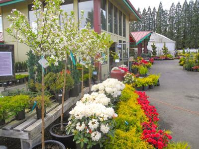 Tsugawa Nursery In Woodland Will Offer Several Diffe Garden Seminars During The Month Of June Enthusiasts Can Attend Such As What To Do