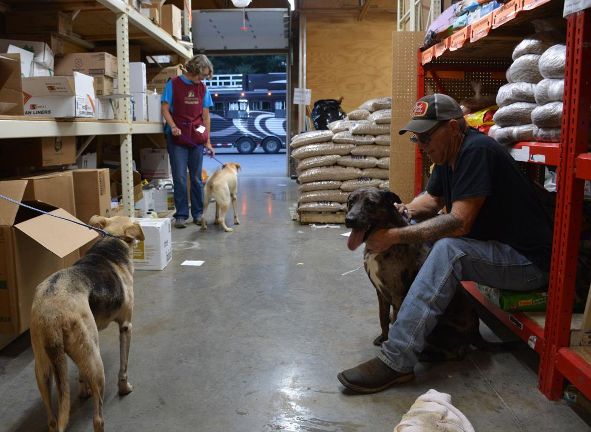 Volunteer Philip Stockard, right, along with a Humane Society of Southwest Washington volunteer, handles dogs from Texas brought to the shelter to free up ...