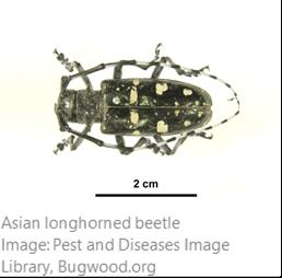 200805.InvasiveSpeciesBrief.1.png