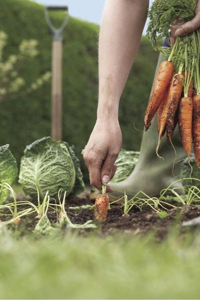 190227.Life.outdoor.Vegetable Gardening.MB.TIF