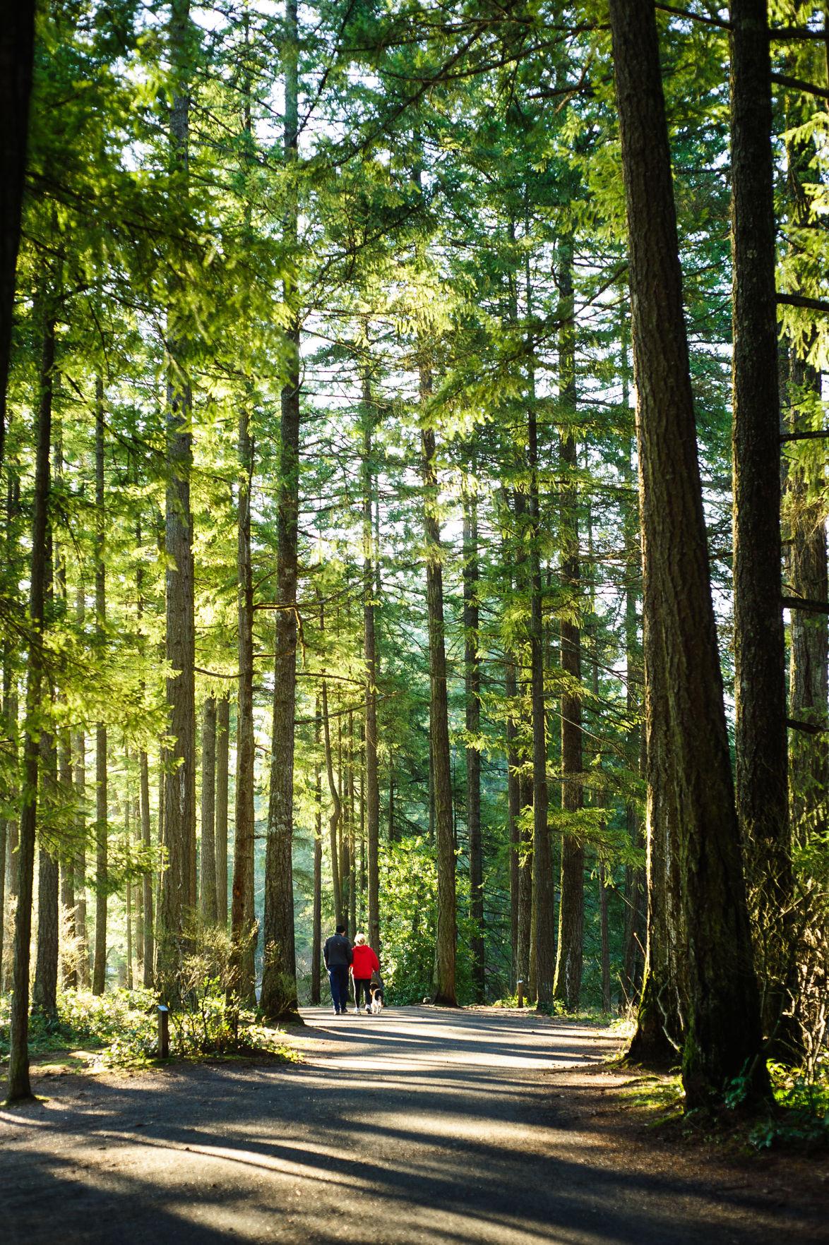 Woods walk
