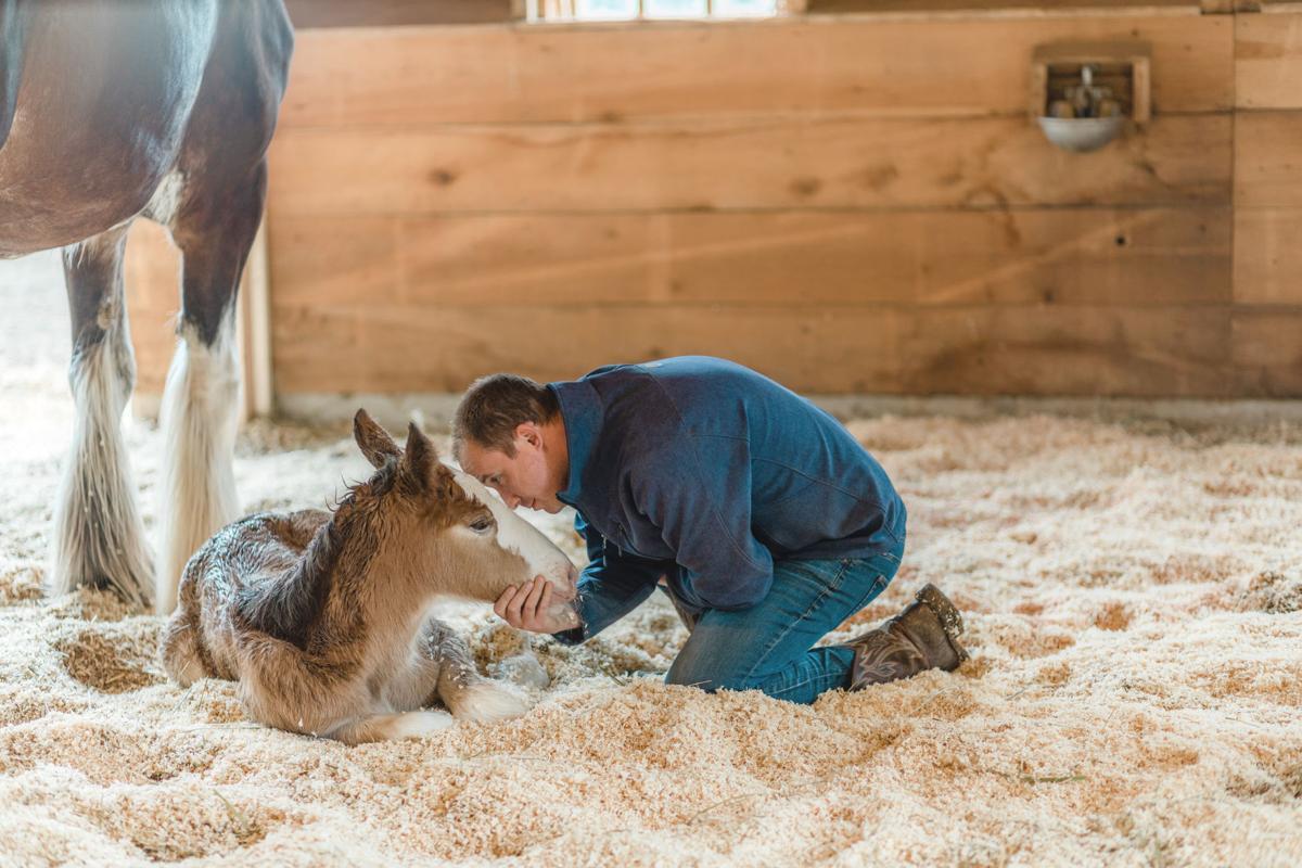 200603.Horse.FarForest.CK.1..jpeg