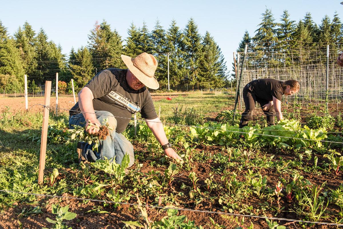 ED AHO, on left, and daughter, Adaline Curtis, work together weeding between plants of lettuce and swiss chard at Beacon Farm in Brush Prairie.