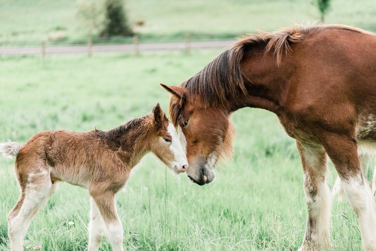 200603.Horse.FarForest.CK.2..jpeg