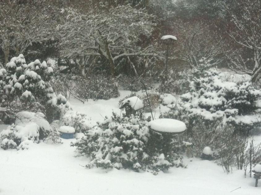 Clark County Master Gardener offers tips on winterizing gardens - The Reflector