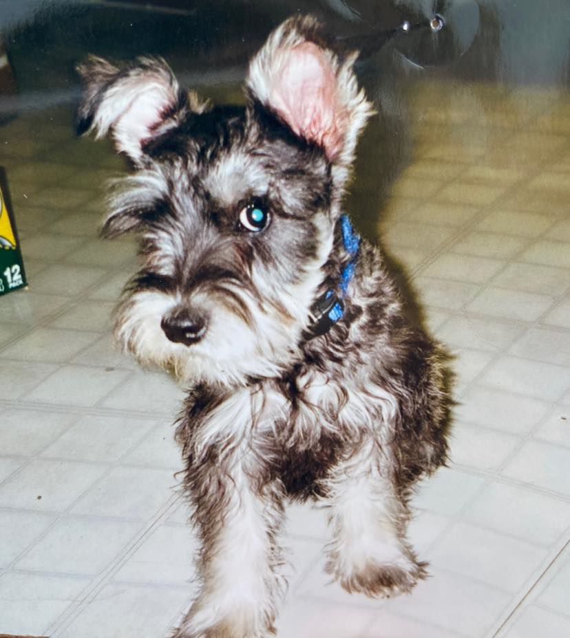 Somewhere out there: long-lost dog reunited with owner after 12 years apart