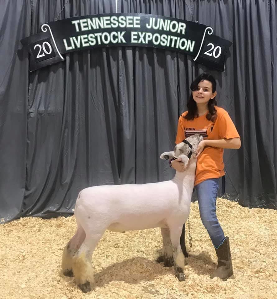 Hawkins 4-Hers exhibit sheep at Cookeville Livestock Expo