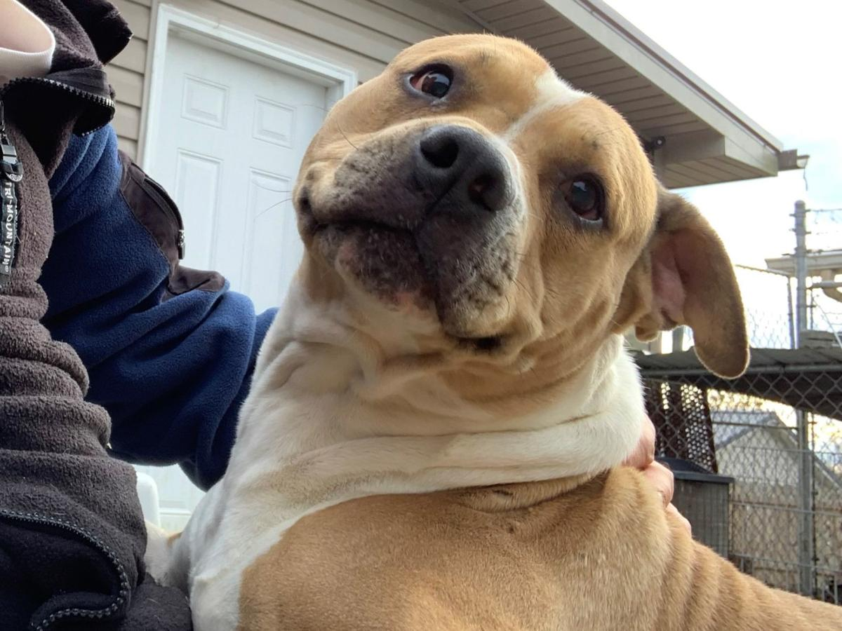 Humane Society looking for homes for their 'Lonely Hearts'