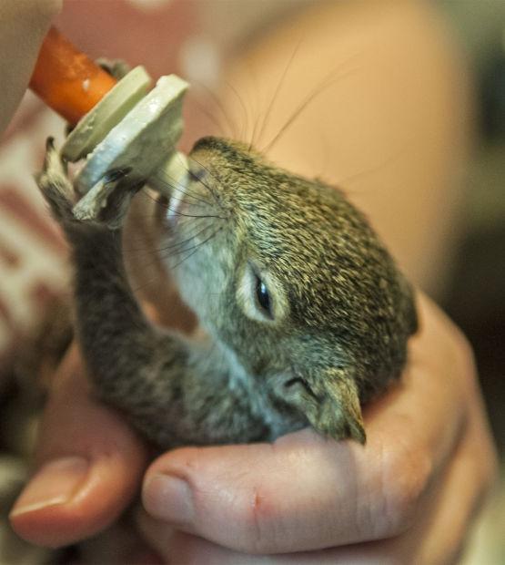 042114-nws-baby-squirrels-001.jpg