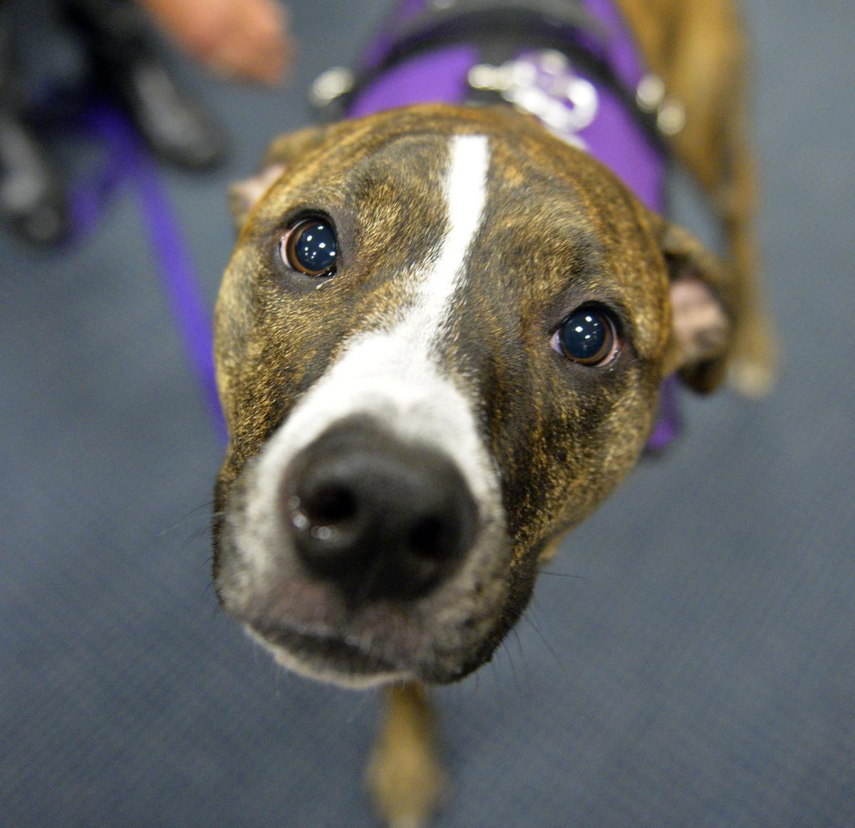 She's here to help: Williamson County therapy dog brings comfort to