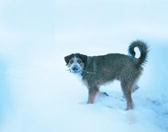Baby, it's cold outsideIf you love them, you'll make sure your pet is protected this winter