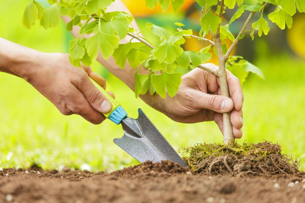 052016-mag-backyard-planting-tree