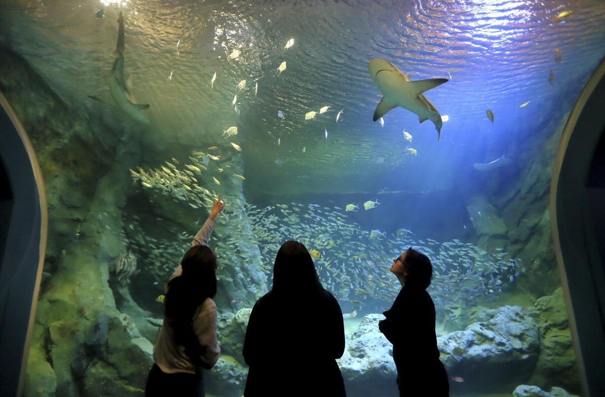 aquarium-stl-01.jpg