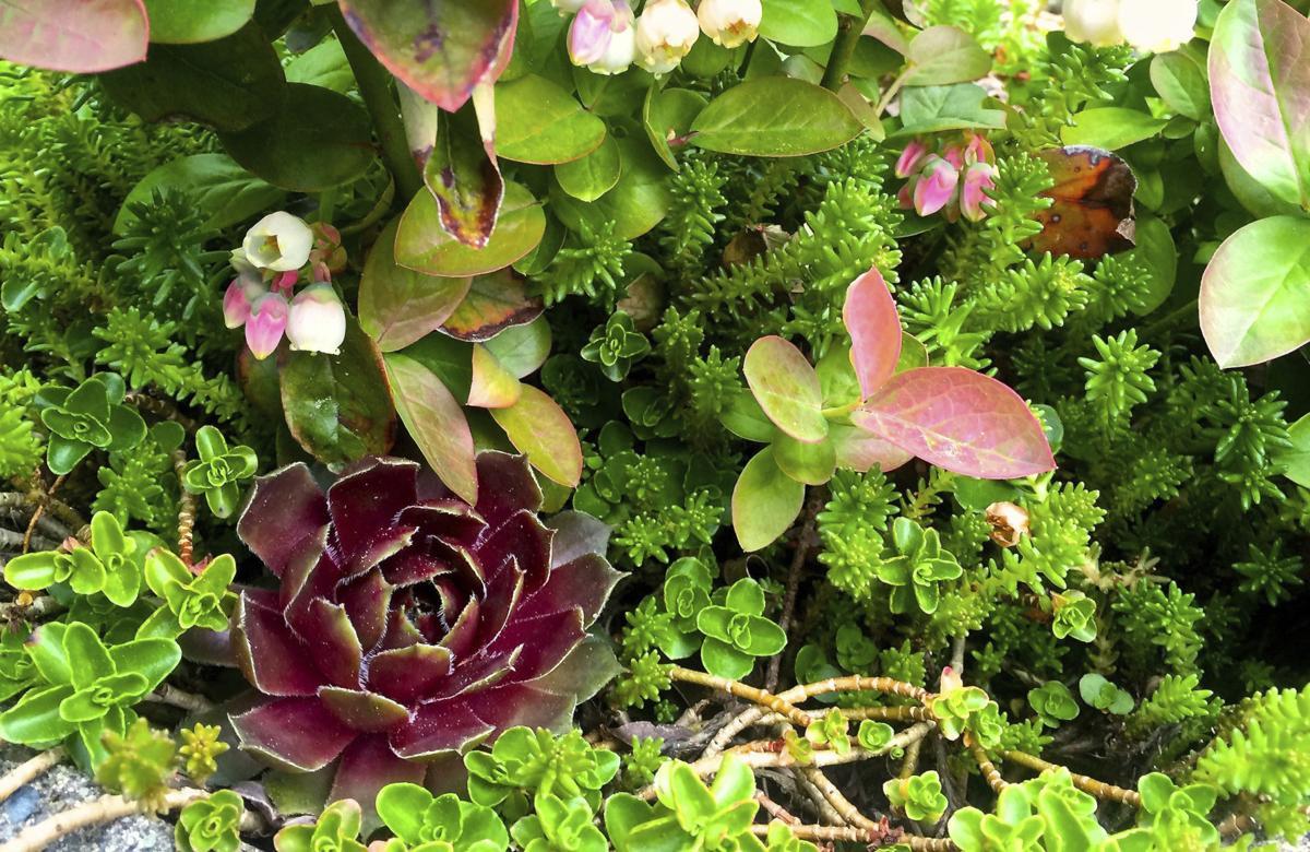 Home: Gardening Succulents