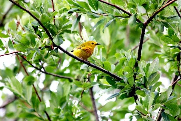 OTD BIRD WATCHING