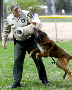 K-9 Illinois State Police Department Canine Unit Trooper /& Dog Team
