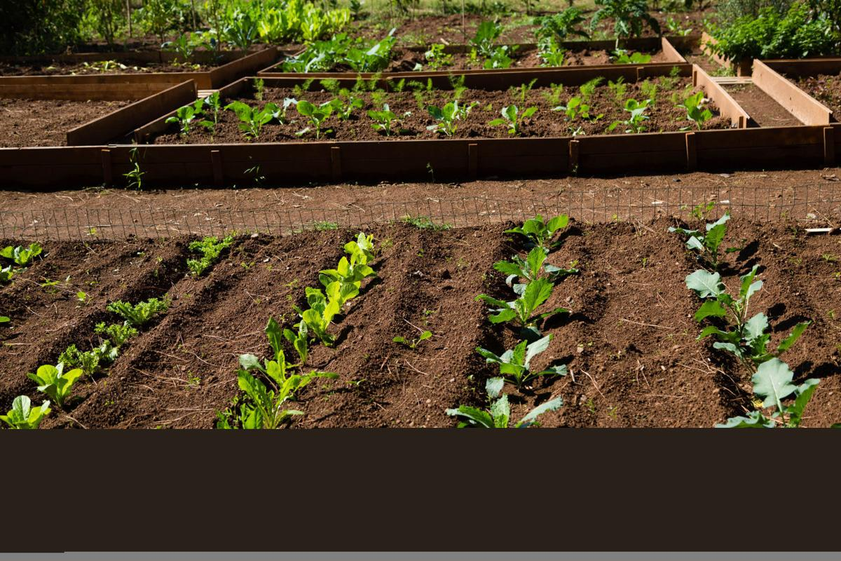 Carbondale premiere planned for documentary on urban gardening ...