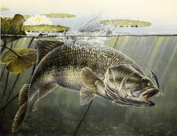 FISH PAINTER