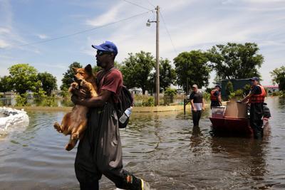 Flood Dog
